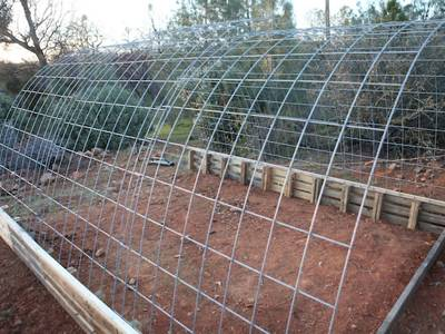 Arch cattle panel trellis for a plant bed.